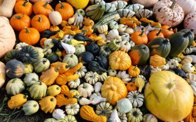 Top Tips & 3 Best Places To Pick Pumpkins Near Farnham 2021